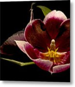 Orchid Metal Print by Jacqui Collett