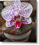 Orchid On Stack Of Rocks Metal Print