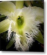 Orchid With Feathery Ends Metal Print