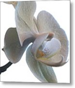 Orchids 1 Metal Print by Mike McGlothlen