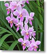 Orchids 15 Metal Print