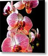 Orchids 2 Metal Print
