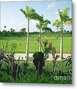 Orchids At Iberostar Golf Course In Punta Cana Dr Metal Print