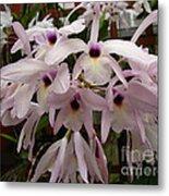 Orchids Beauty Metal Print