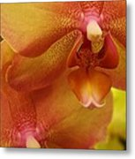 Orchids Delight Metal Print