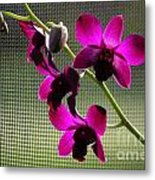 Orchids In The Sunlight Metal Print