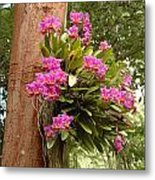 Orchids On Tree Metal Print