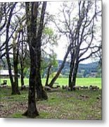 Oregon Sheep Farm Metal Print