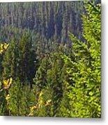 Oregon Trees Metal Print