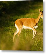 Oribi Two Metal Print