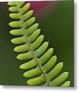 Ornamental Fern Metal Print