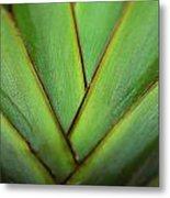Ornamental Palm Detail Metal Print