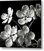 Ornamental Pear In Black And White Metal Print
