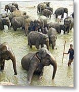 Orphaned Elephants Metal Print