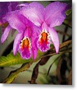 Orquideas Flor De Mayo Del Bosque Nublado Metal Print