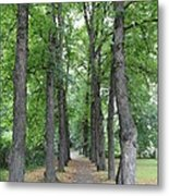 Oslo Trees Metal Print