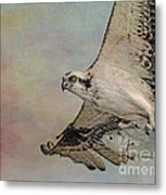 Osprey And Fish Metal Print
