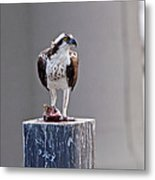 Osprey And Sushi Metal Print