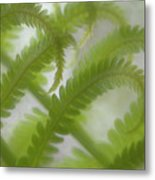 Ostrich Fern Frond Pattern Of Curves Metal Print