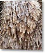 Ostrich Fluff Metal Print