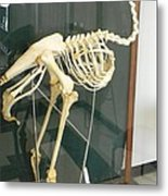 Ostrich Skeleton Metal Print