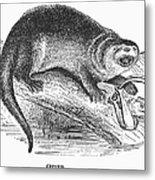 Otter, 1873 Metal Print