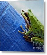 Out From Under The Blue Tarp Metal Print