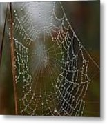 Out In The Morning Dew Metal Print