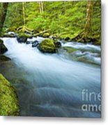 Out Of The Rainforest Metal Print by Mike  Dawson