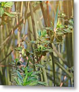 Out On The Pond Metal Print