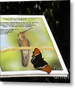 Outbound Butterfly Metal Print
