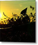 Over The Fence Metal Print