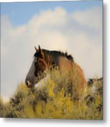Over The Hill Pinto Metal Print
