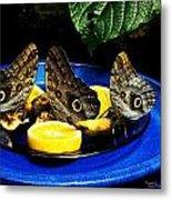 Owl Butterflies Metal Print