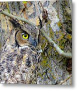 Owl Eye Metal Print