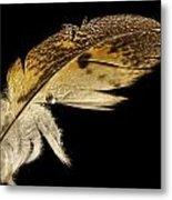 Owl Feather With Water Metal Print