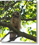 Owl In Central Park Metal Print