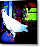 Owl Pigeon Metal Print