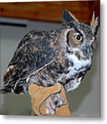 Owl Together Now Metal Print by LeeAnn McLaneGoetz McLaneGoetzStudioLLCcom