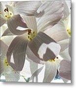 Oxalis Flowers Metal Print