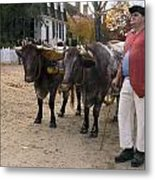 Oxen And Handler Metal Print