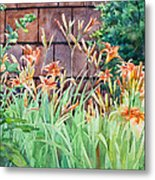 Oxenden Lilies Metal Print by Peter Sit