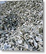 Oyster Shells Metal Print
