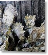 Oysters On Piling Metal Print