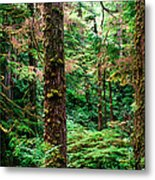 Pacific Rim National Park 14 Metal Print