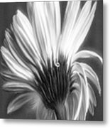 Painted Gerbera Daisy In Black And White Metal Print