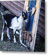 Painted Goat Metal Print