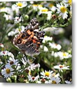 Painted Lady - Surrounded In White Metal Print