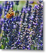 Painted Lady Butterfly On Lavender Flowers Metal Print