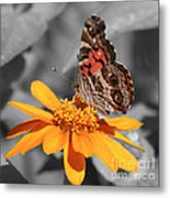 Painted Lady Butterfly On Zinnia Metal Print